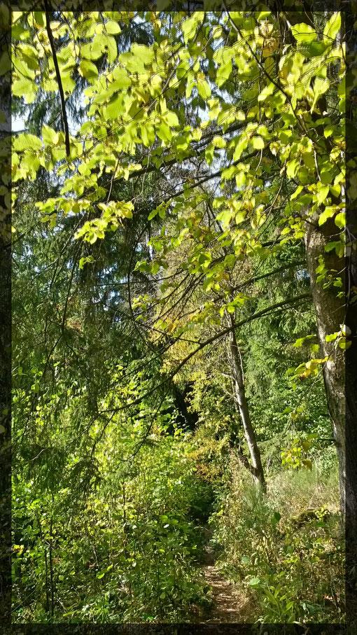 Verwunschene Pfade durch herbstlichen Wald-ein Träumchen