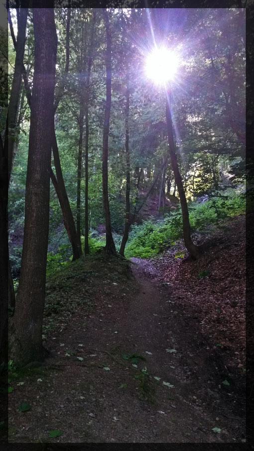 Wegstrecke bei Schloss Landsberg, ein Märchenwald