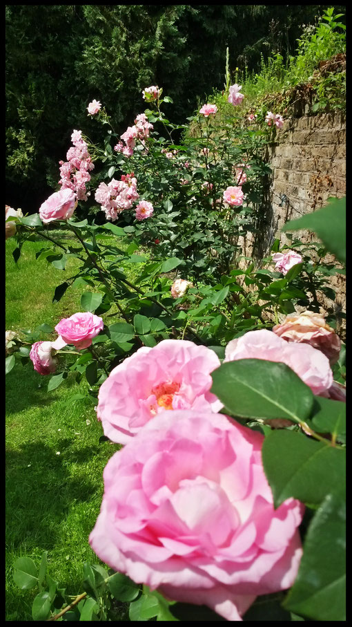 Rosengarten auf Burg Lede