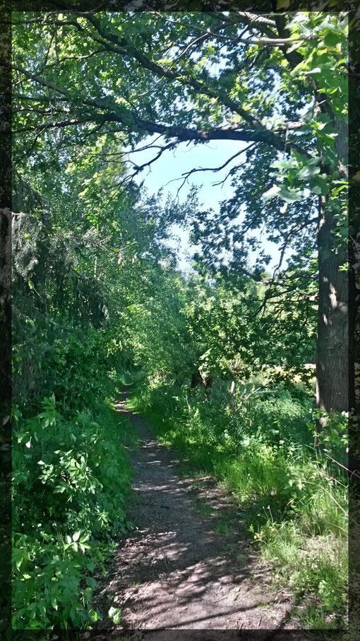 Mal schattig durch Wald, über Felder- immer abwechslungsreich