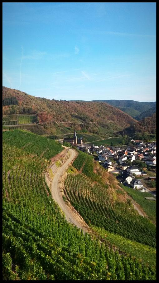 Traumblicke vom Rotweinwanderweg