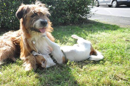 Bootsmann und sein bester Freund Benny