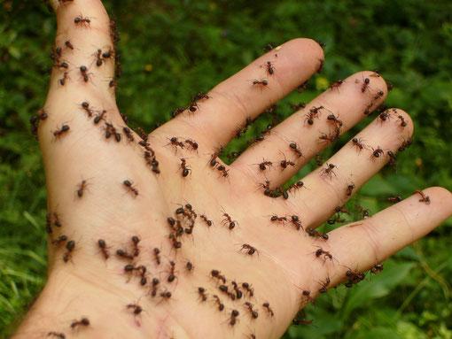 Zecke Biene Ameise Käfer Insekt Krise Katastrophe Befall Stich Schmerz Tipps Hausmittel Tricks Wespenstich Moskito Stechmückenstich