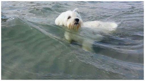 Joelle, Pepita und Carlino im Strandkorb  an der Ostsee