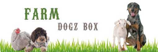 August dogz box Gartenparty