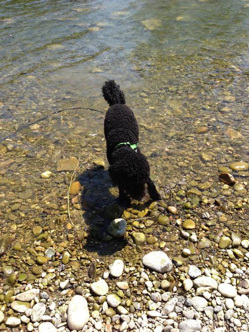 Einmal mehr: Der Nicht-Wasserhund im Wasser! Ein Wunder!!!