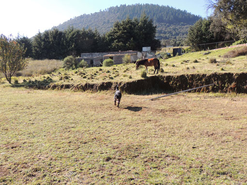 Campo Entrenamiento
