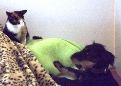 Verflixt: warum darf diese Katze aufs Sofa und ich nicht???? (Lilly und Quinte, Bild S. Gruner)
