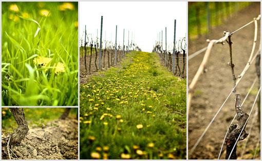 Weingut Trautwein: unsere Weinberge befinden sich rund um das schöne rheinhessische Flonheim
