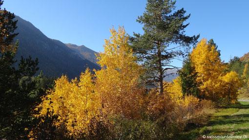 Die Natur im Herbst ist einfach traumhaft schön!