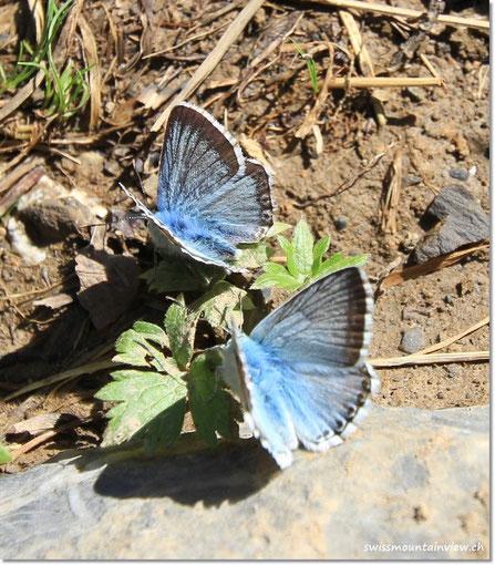 Dutzende von Schmetterlingen,