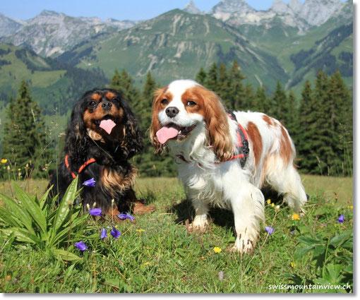 Swissdoggies in the Swiss Mountains.