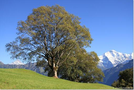 Beatenberg - Waldegg