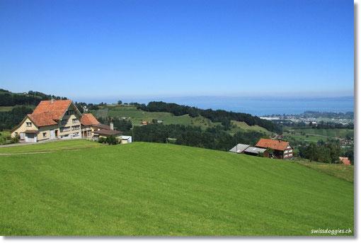 Wegen eines riesen Staus in Zürich und dem Umweg via Sargans Rheintal,