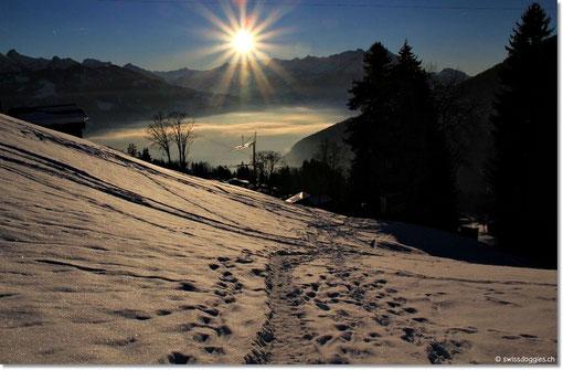 Der Sonne entgegen marschieren wir den Hang hinunter