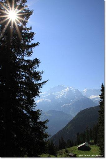 500 Höhenmeter, durch den Wald