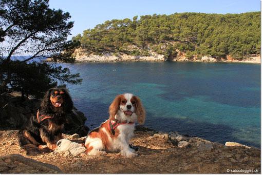 Ein toller Ort für ein Shooting mit meinen Doggies <3 <3
