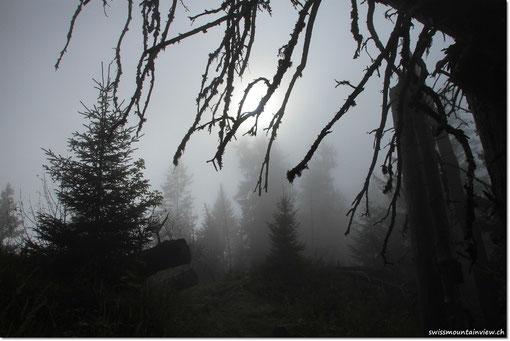 ist Twilight puuuuur....