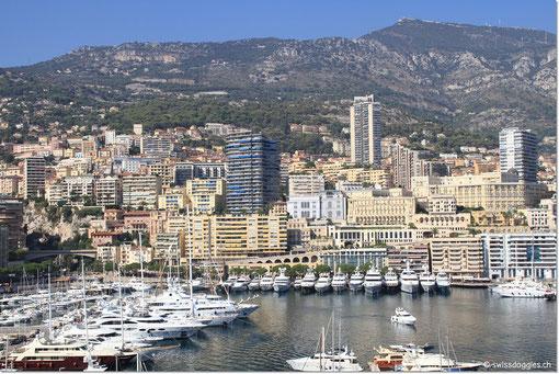 Sicht in den Hafen von Monaco...