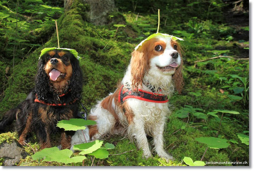 Im Wald hat es spezielle Bewohner...