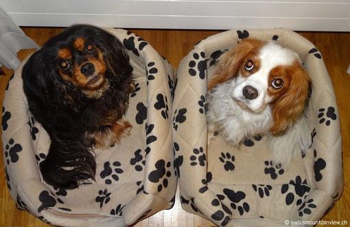 ....und die doggies auf ihr Nachtessen warten :)