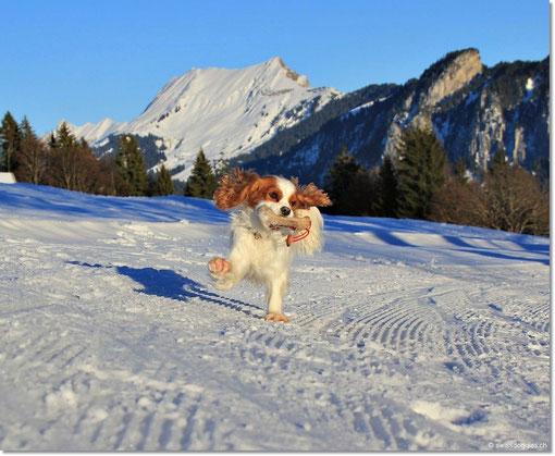 und Charly mit snowdance