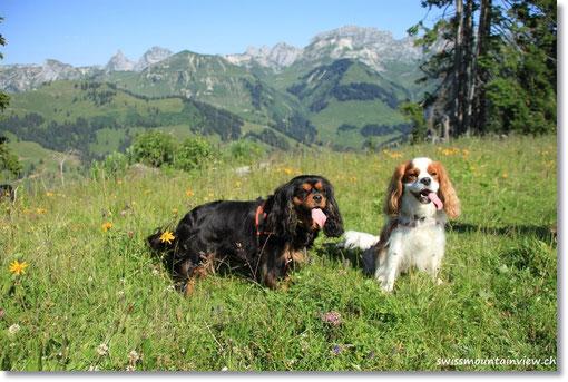 heizt die Sonne unseren Doggies schon wieder ein.