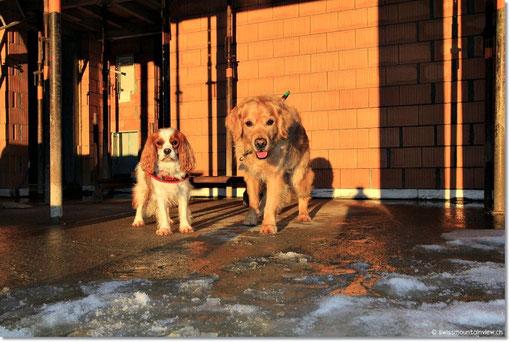 Doggies - in einem Jahr ist es hier richtig kuschlig und schön!