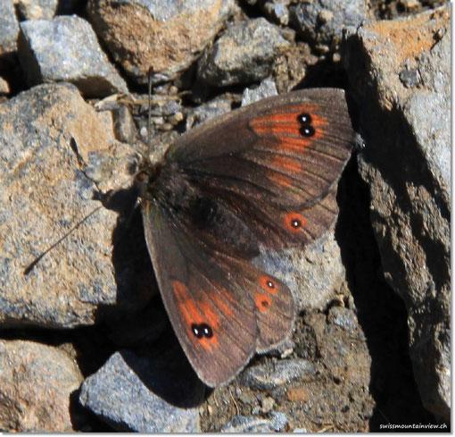 und Charly's Schmetterlingen ;-)