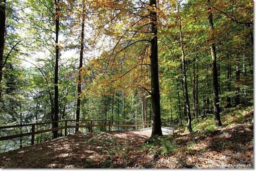 Herrlich - die Touris sind im Ort geblieben und wir sind fast allein auf unserem Waldspaziergang.