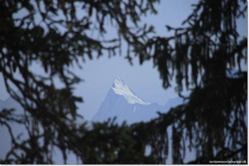 auf die Berge... doch ehrlich gesagt, der grösste Teil des Spaziergangs