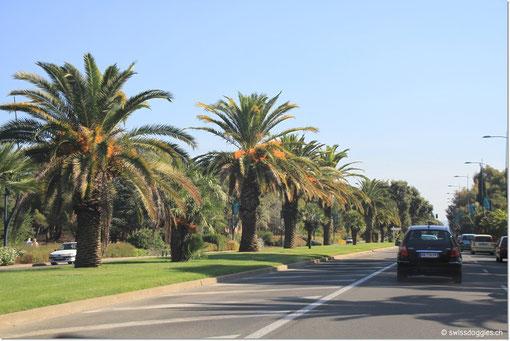 Samstag, Fahrt von La Madrague nach Antibes. Wir wählen bis Hyères und ab Fréjus die Küstenstrasse. Hier fahren wir durch Hyères, la ville des fleurs; die Hauptstrasse beidseitig mit wunderbaren Palmen gesäumt.