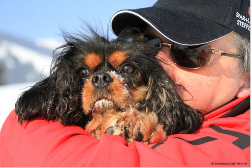 Trotz Wintermantel nehmen unsere Doggies zwischendurch das Menschentaxi...