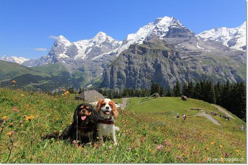 swiss-mountainview-doggies ;)