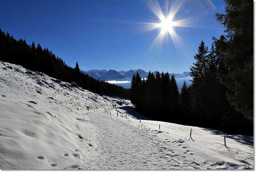 Dann gingen Jürg, Pascal und Nathi auf die Skipiste und wir mit Frauchen winterwandern :)