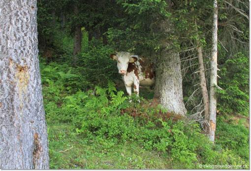 """Scharf beobachtet von """"Waldkühen"""" ;)"""