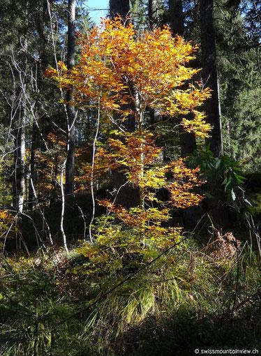 Mit freunden machen wir uns am späteren Vormittag unterwegs durch den bunten Herbstwald