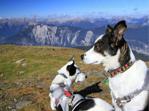 Doggies genießen Ausblick vom Wetterkreuzkogel