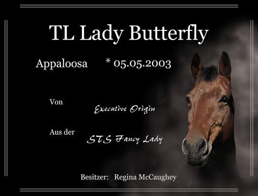 Boxenschild Appaloosa Fly (2013)