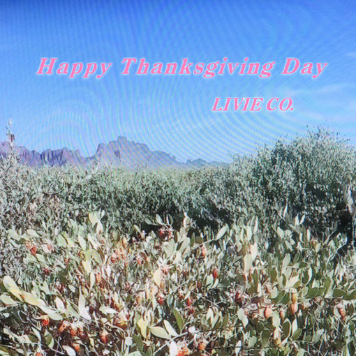 Happy Thanksgiving Day  Livie Co.