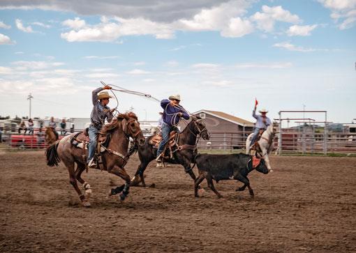 Rodeo in Arizona