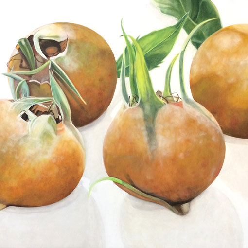 Mespilus germanica I 2017 70x50cm oil/canvas