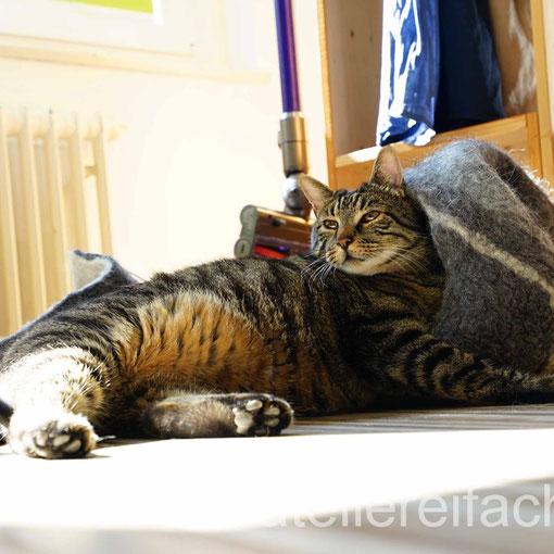 Entspannung auf «Tiegerkatzenart» II, Horw, Luzern, CH