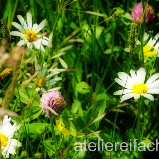 Die Wiese lacht, Sommerwiese, Horw, Luzern, CH