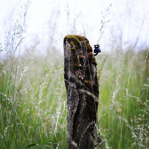 "Hannah Chantrain - ""Der alte Weidepflock"", Nähe Sprockhöveler Wald"