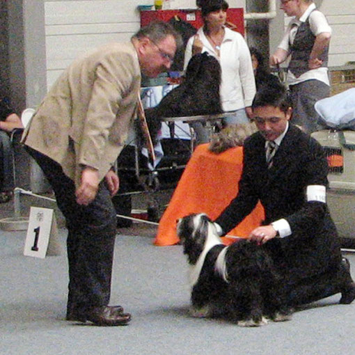 Lilly being judged in the ring