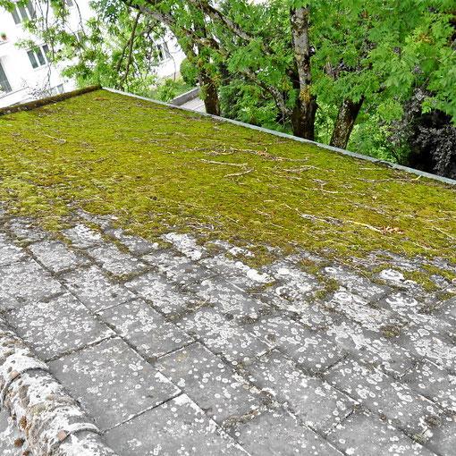 Algenbewuchs oder Moos auf dem Dach zerstört die Hausdachbeschichtung