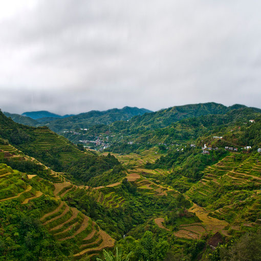 Terrace rice fields in Banaue, Philippines