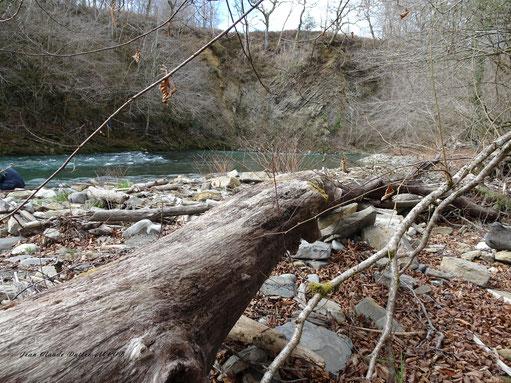 Le desman sur les berges du gave d'Ossau au coeur de la forêt ancienne du Bager d'Oloron par ACCOB