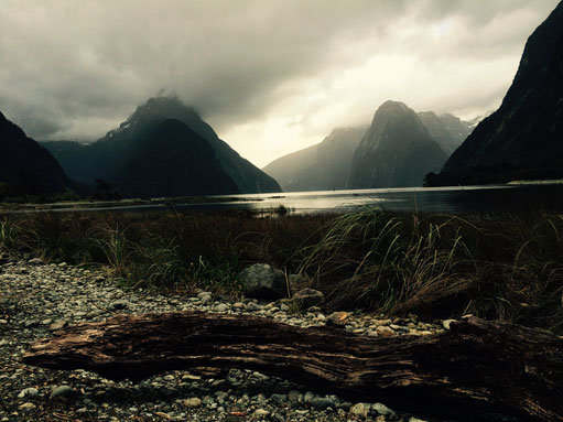Should i do the cruise, Milford Sound